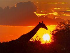 Sundown in Africa