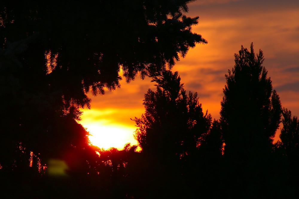 Sundown in den Bäumen