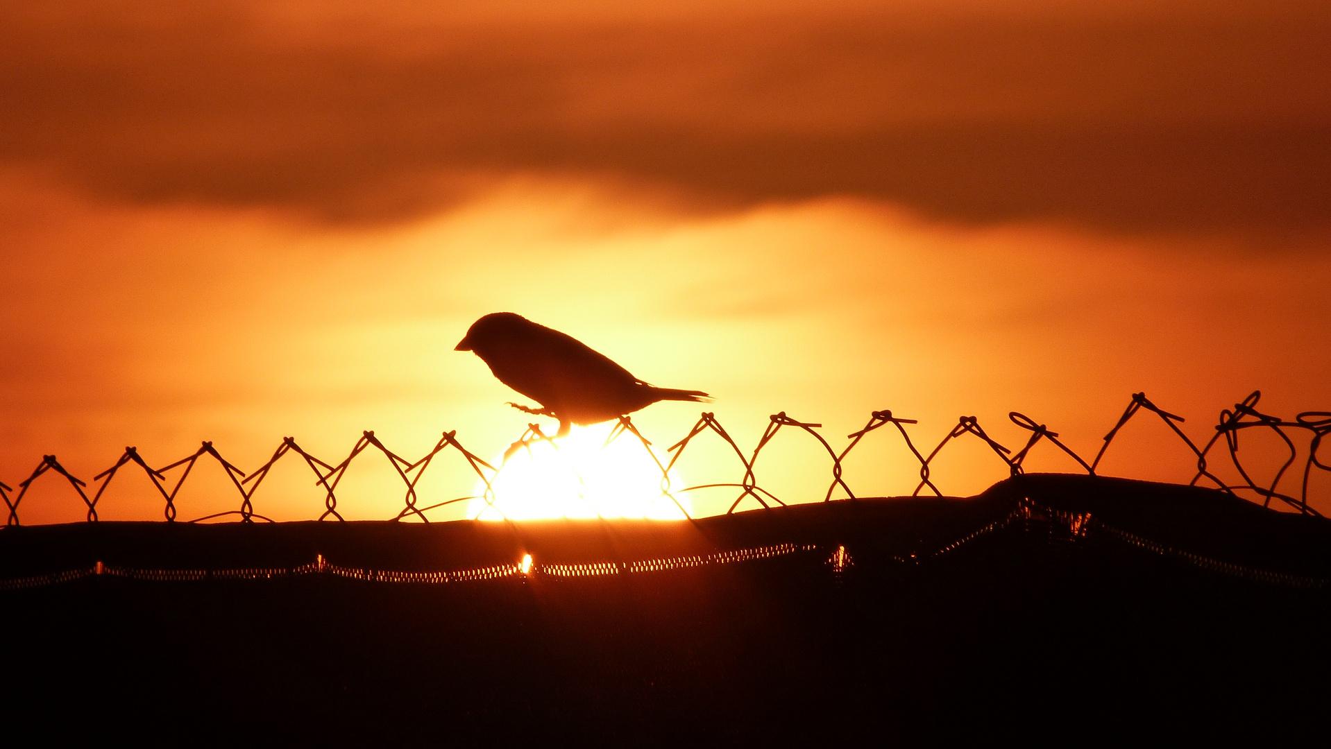 Sundown IV