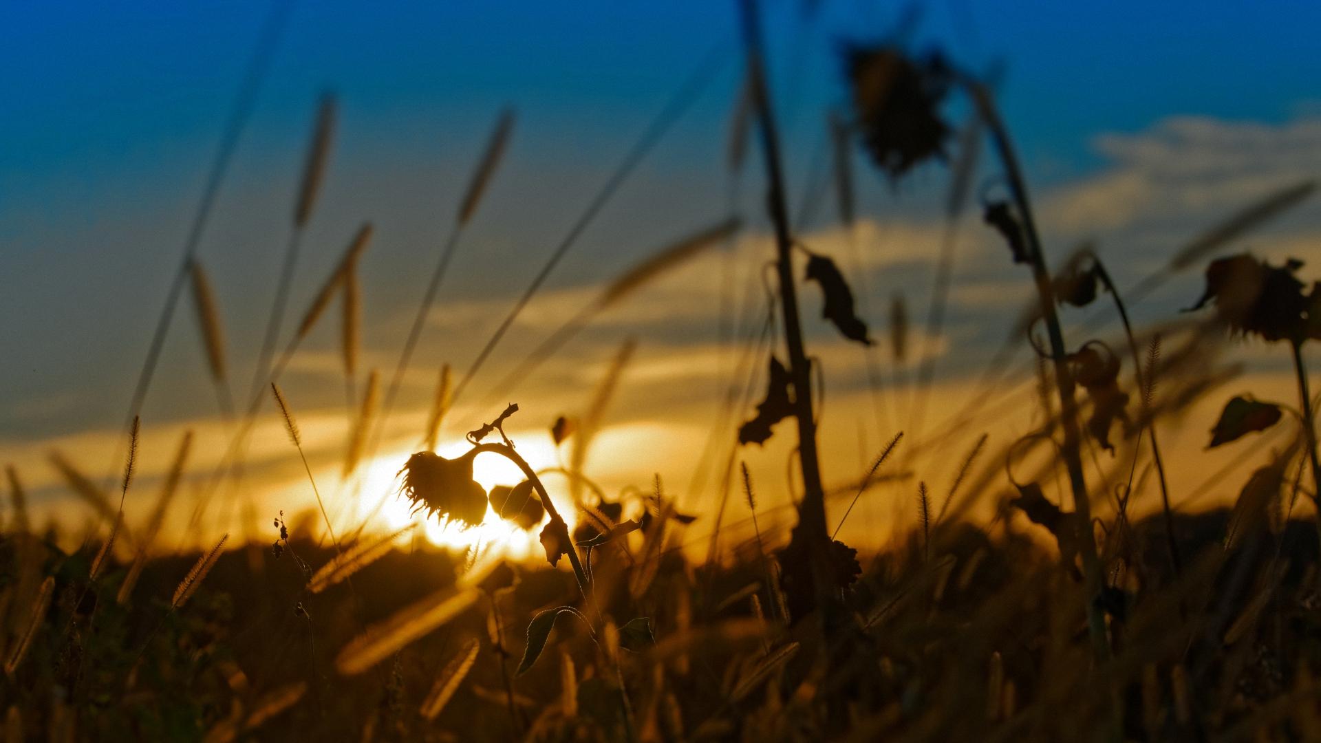 sundown(2) ...