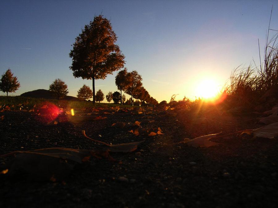 Suneshine in autumn