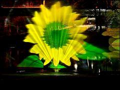 ° SUN'flower °