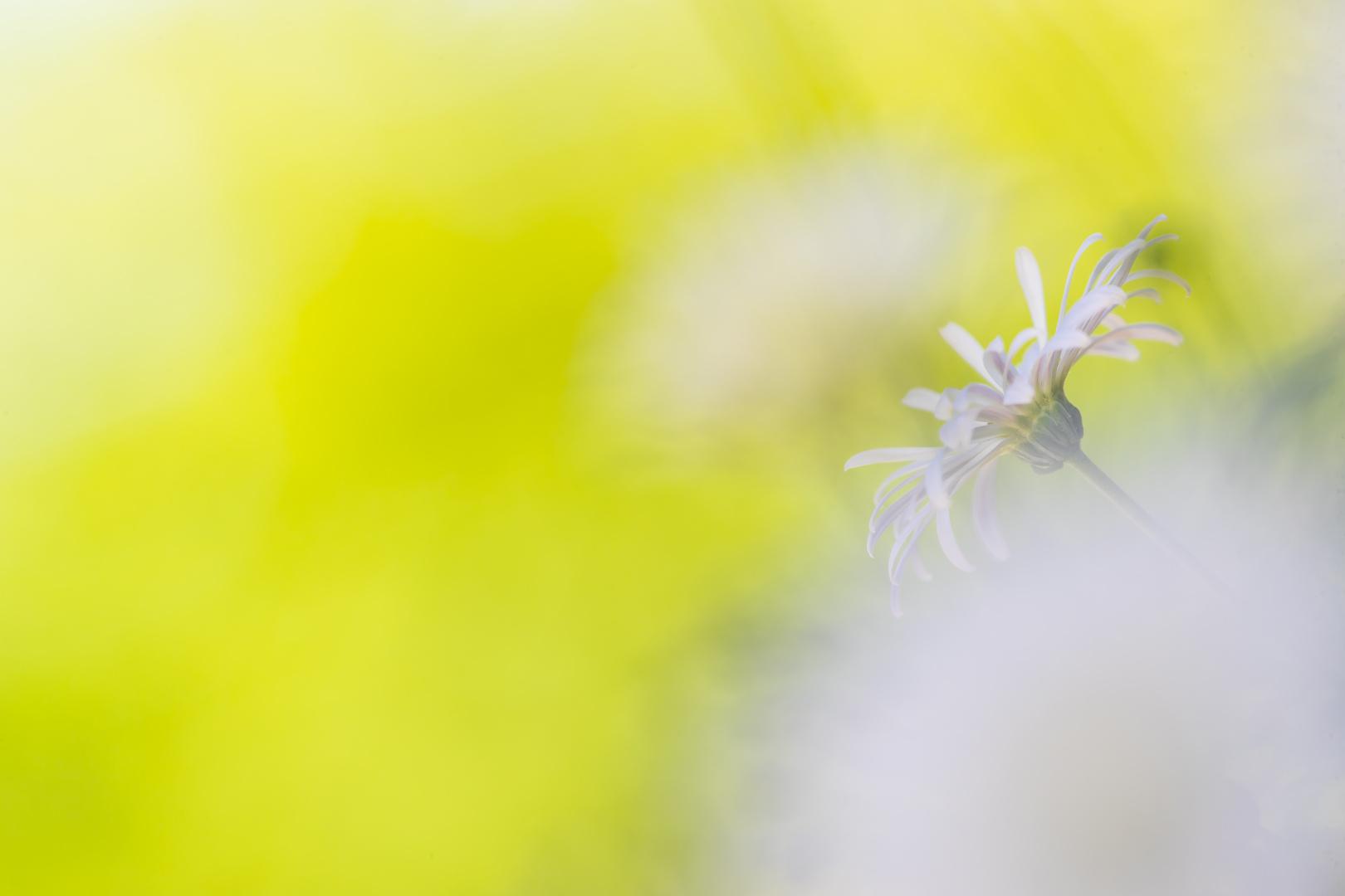 Sun&Flower