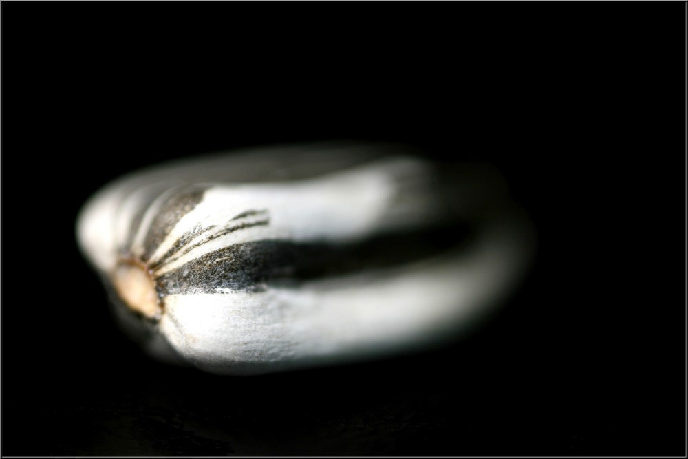 -- sunflower seed --