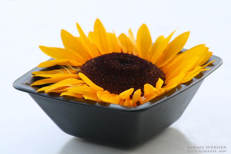 Sunflowerpower
