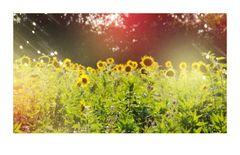 SUN'flowers