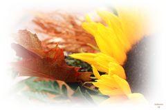 Sunflowers & Dream