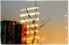 . Sunlight in my Home .