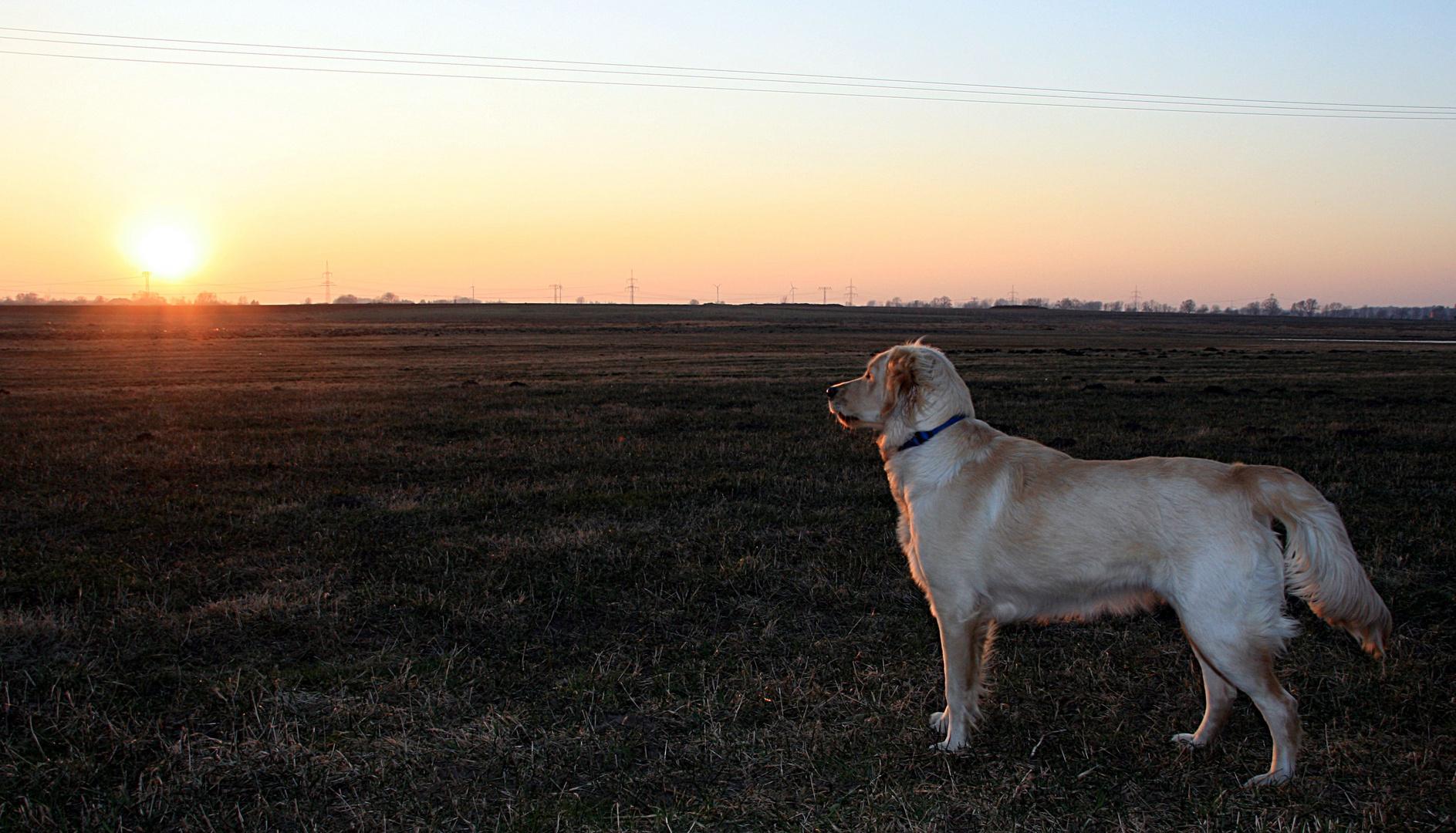 Sunny mit Sonnenuntergang