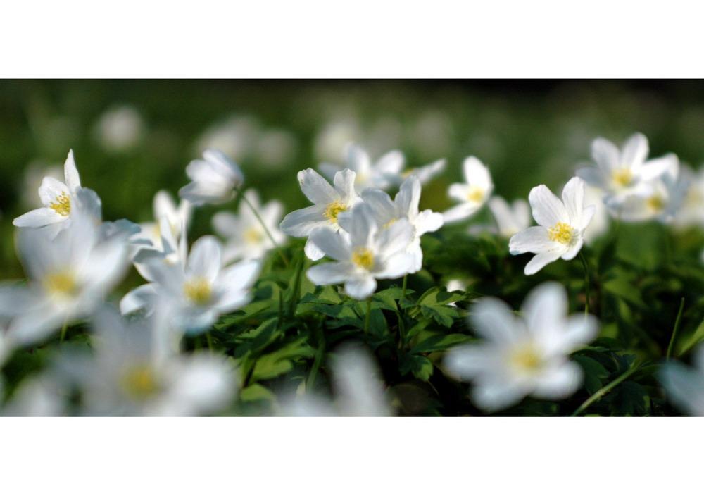 sunny springtime greetings