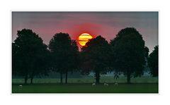 Sunrise (6:23:45) 02.08,2014 (IJzendijke)