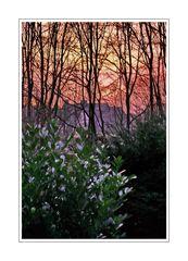 Sunrise seen from 'Dichterviertel' (Wuppertal Hammerstein )