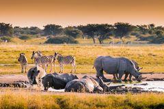 Sunset am Nashorn Wasserloch - Botswana