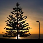 sunset behind a christmas tree