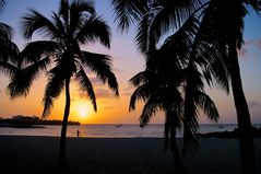 Sunset between palm trees ...