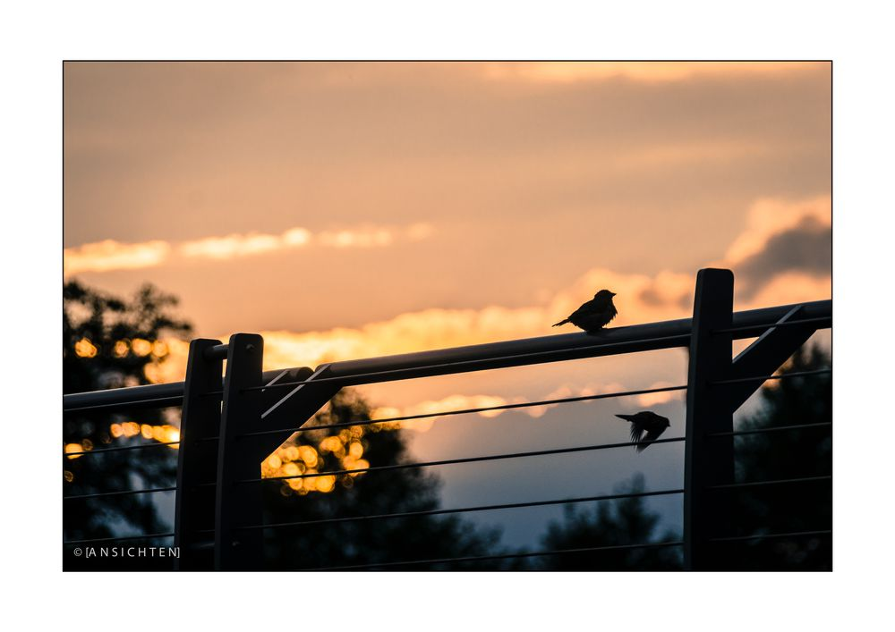 [sunset birds - see you tomorrow]