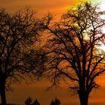 Sunset & Burning Tree