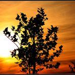 Sunset Enderndorf