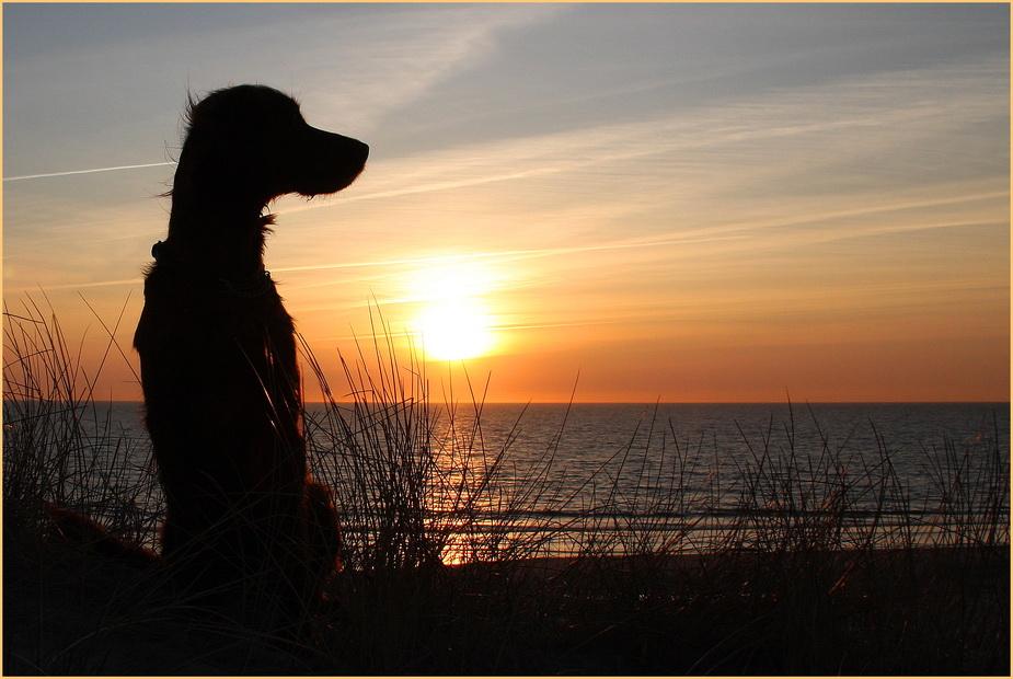 *Sunset Girl * reloaded*