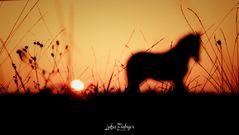 #Sunset horses