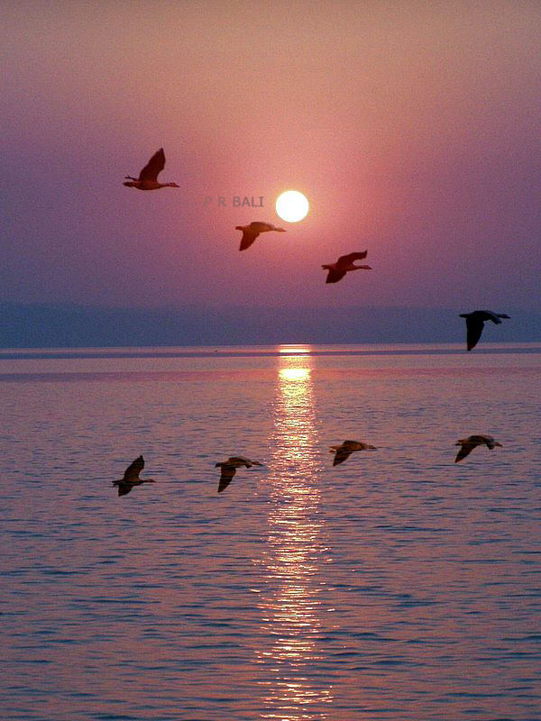 Sunset in Pongdam Lake