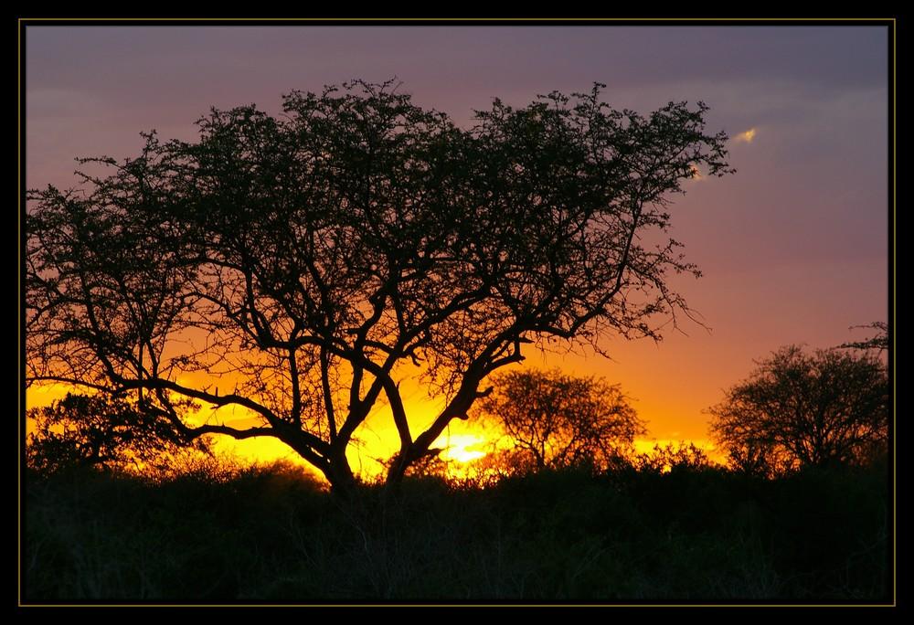 Sunset in Tsavo East (Reloaded)