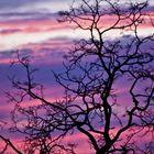Sunset in Virginia... bigger