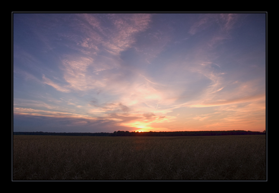 ++ sunset light and wheat ++