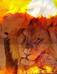 Sunset Lion Love DigiArt