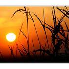 °~_Sunset  N° 5_~°