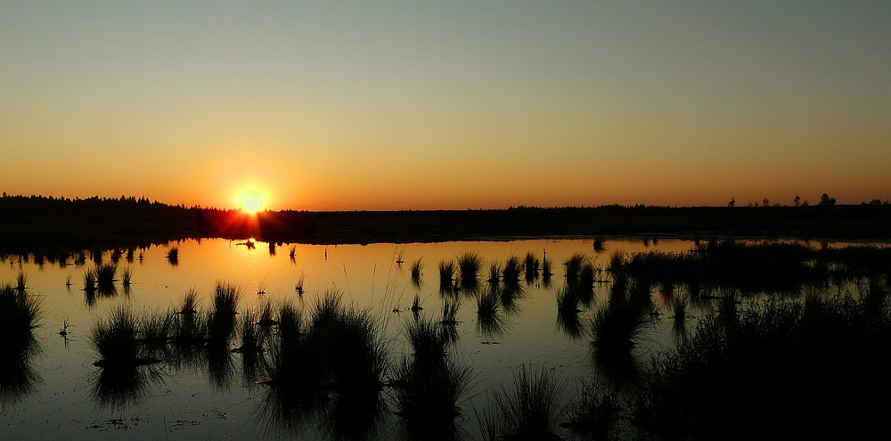 Sunset over the swamp (1) : The beginning