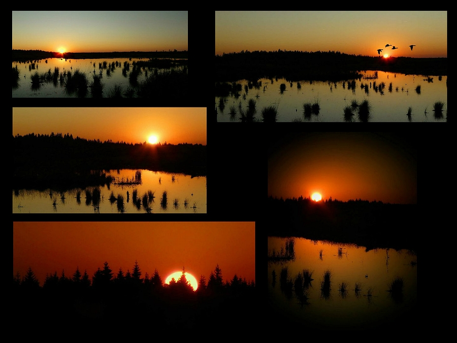 Sunset over the swamp : the compilation