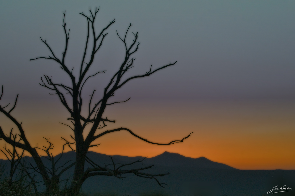 sunset tree Spain