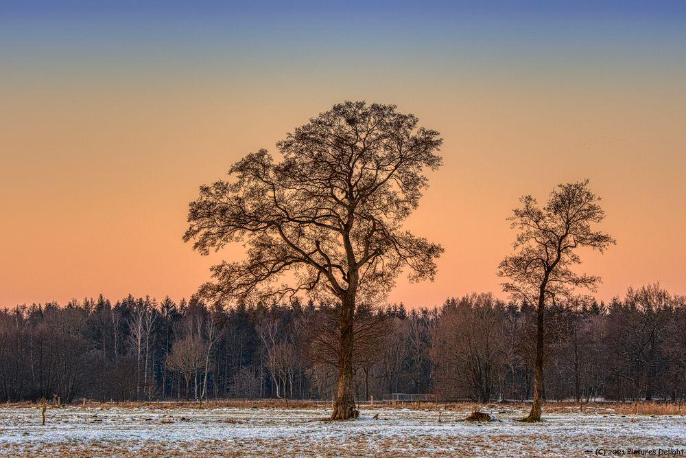 - Sunset trees -