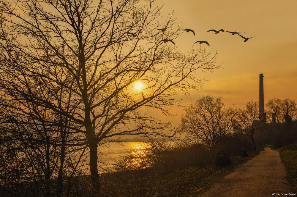 - Sunset Wedel -