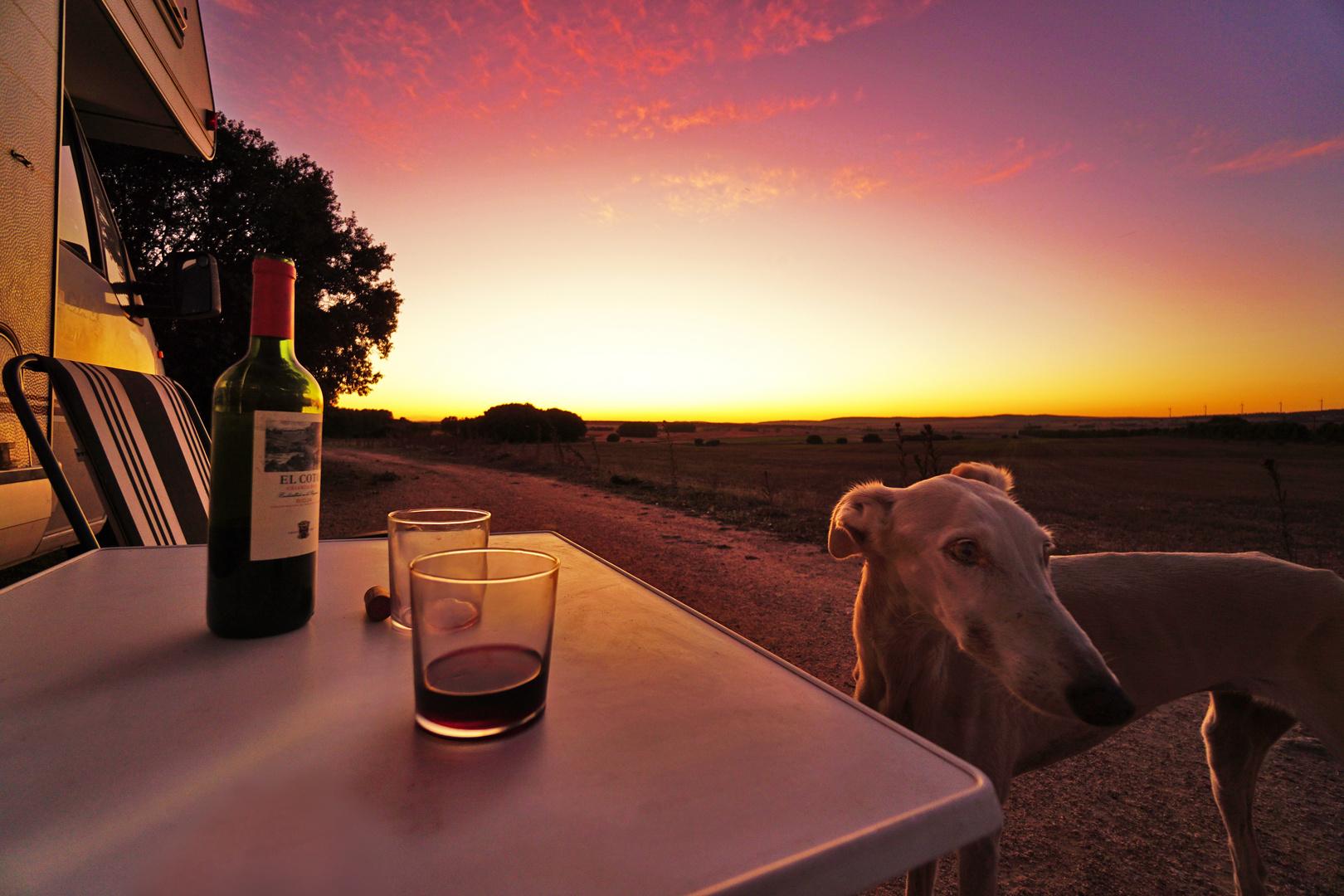 Sunset with Grayhound/ Spain