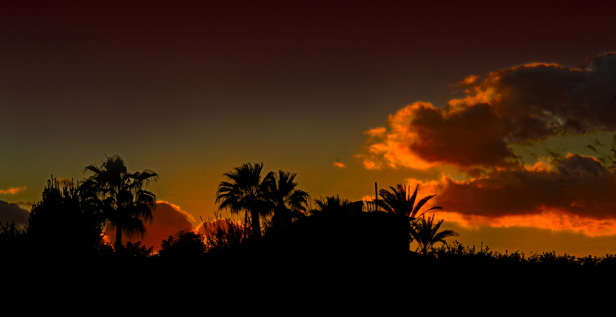 """""""Sunset with Palm Trees"""""""