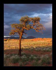 Sunsettree #1