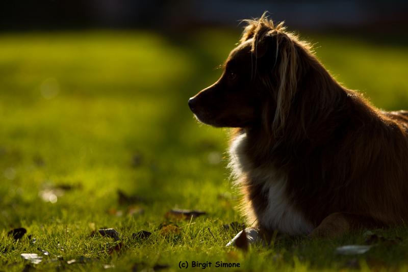 Sunshine Billy!!
