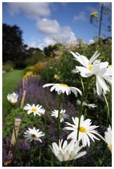 Sunshine for our Daisy...