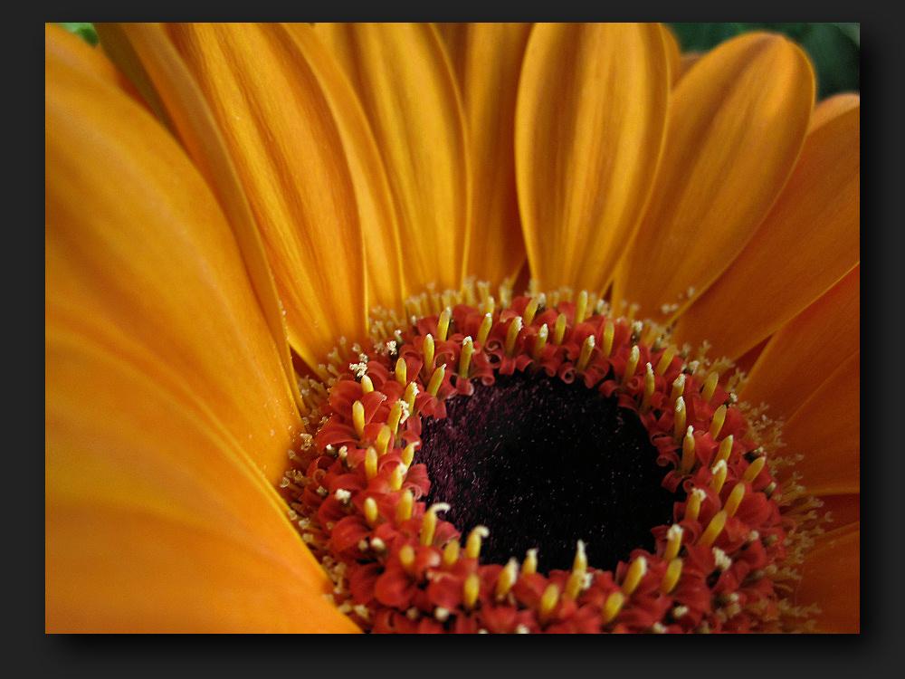 ''Sunspot''