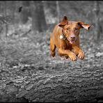 Superdog ;-)