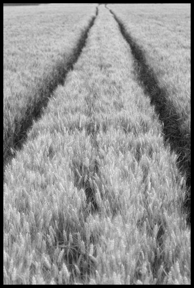 Sur la route du blé...