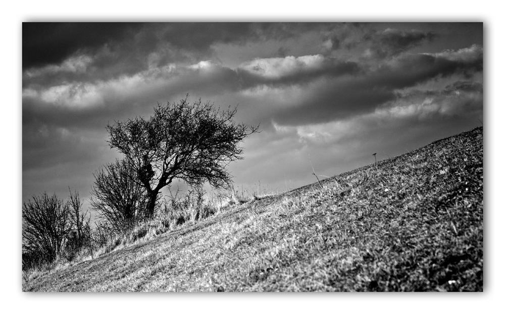 Sur le flanc de la colline