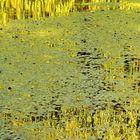 sur l'étang d'or