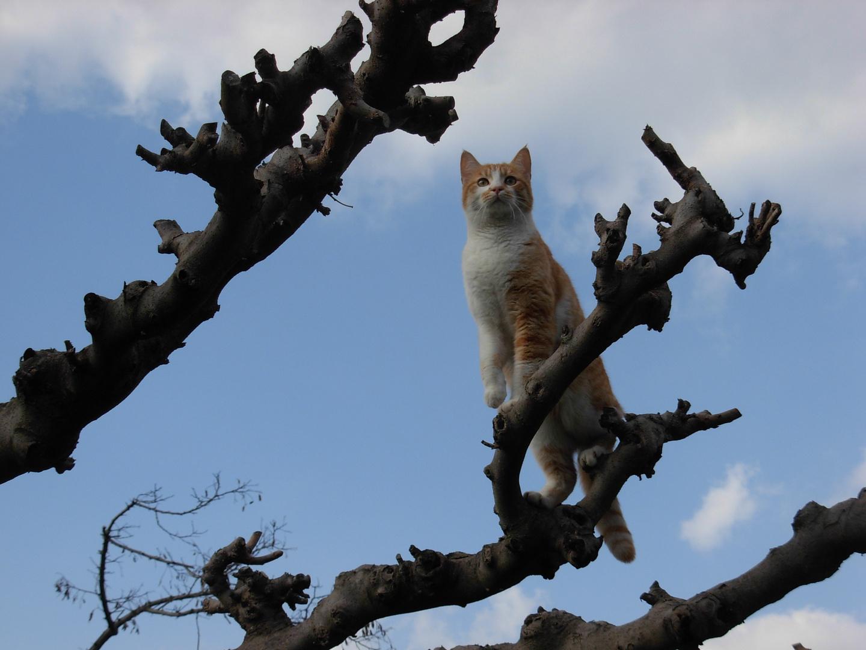 Sur un arbre perché !