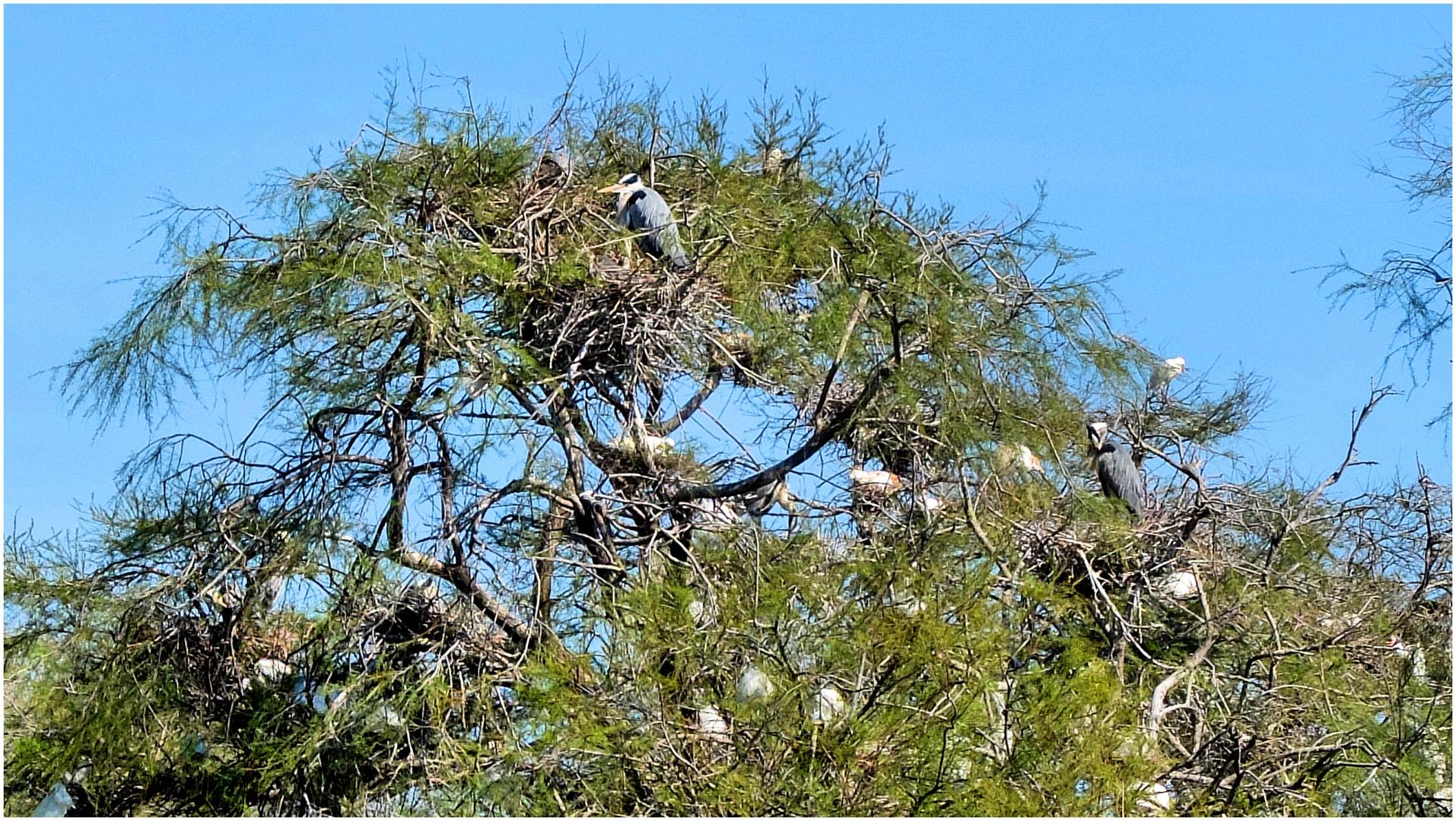 Sur un arbre perchés