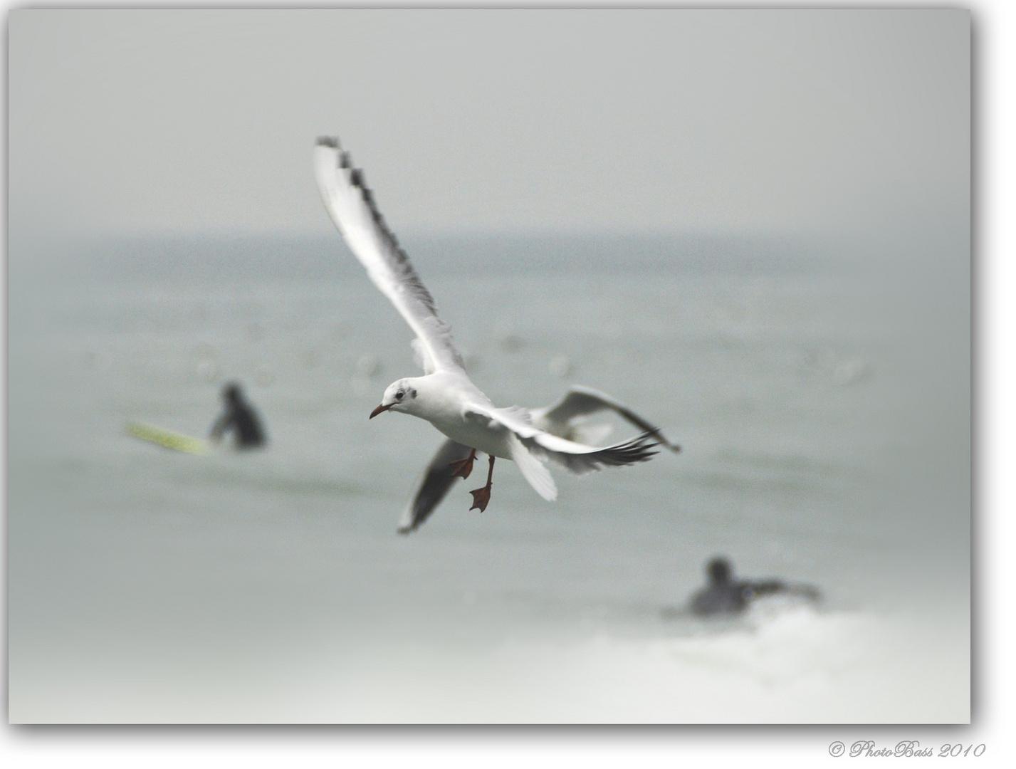 Surf......