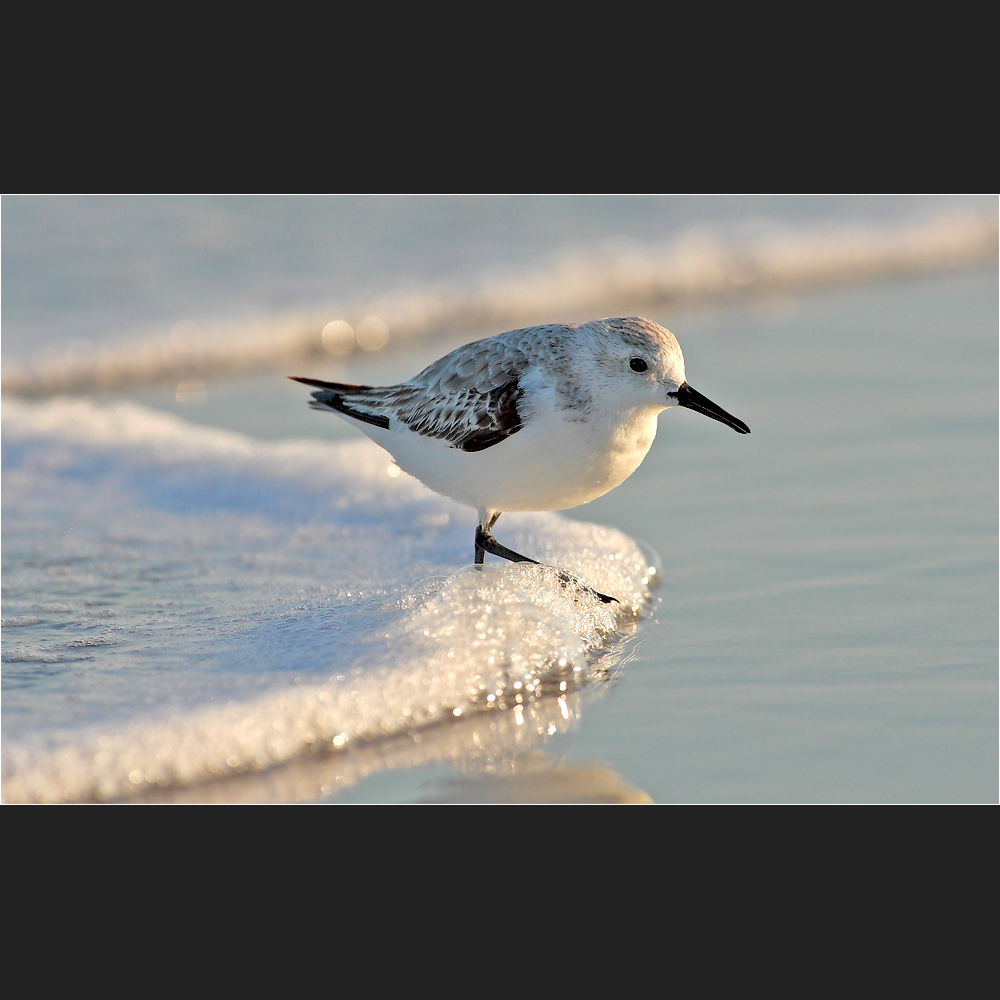 [ surfing bird ]