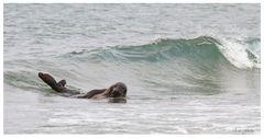 Surfing BRD...........